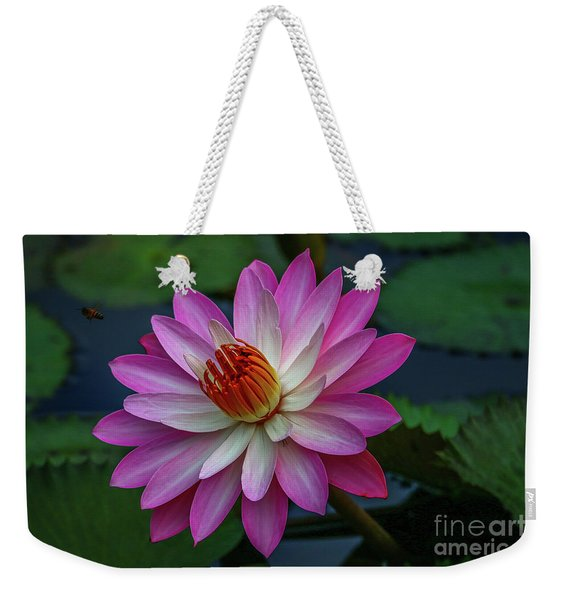 Weekender Tote Bag featuring the photograph Sunlit Lily by Tom Claud