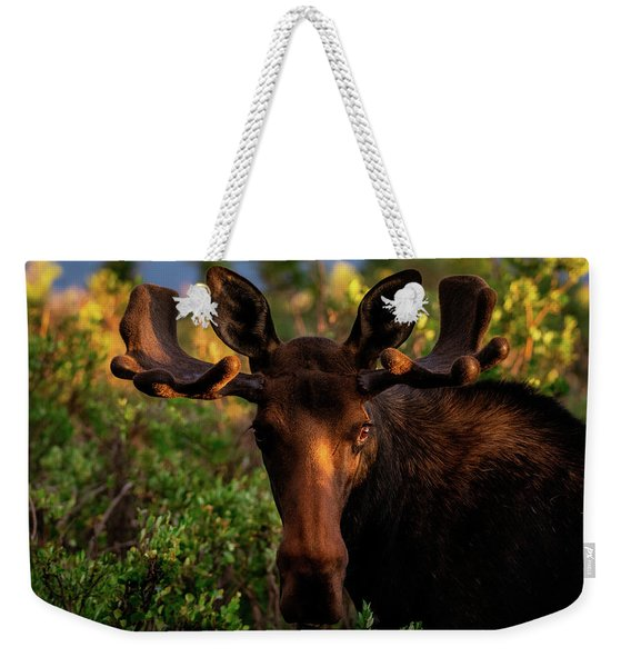 Sunrise In The Eye Of A Young Bull Weekender Tote Bag