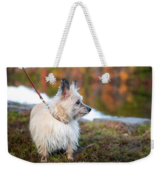 Weekender Tote Bag featuring the photograph Tasha 5 by Brian Hale