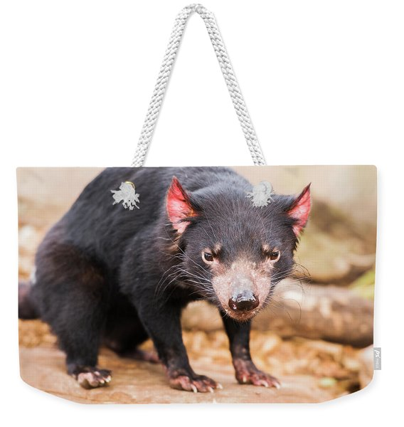 Tasmanian Devil In Hobart, Tasmania Weekender Tote Bag