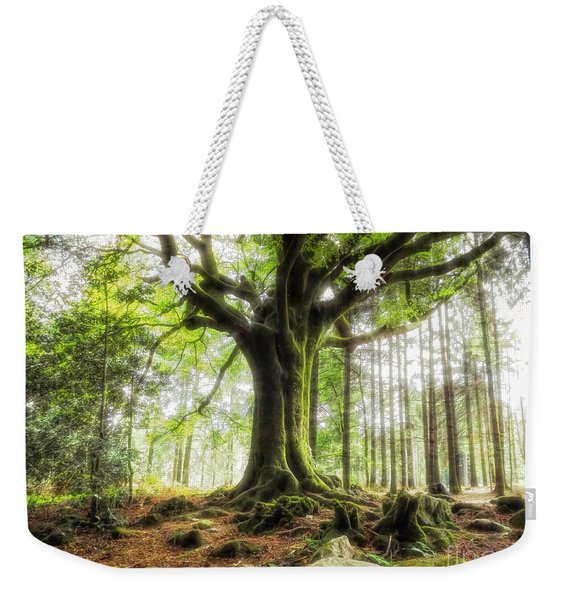 The Beech Of Ponthus And Sidoine Weekender Tote Bag