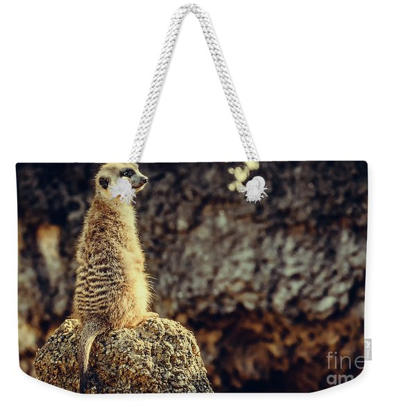 Weekender Tote Bag featuring the photograph The Cat Who Does Not Meow... by Dheeraj Mutha
