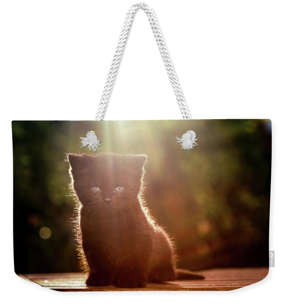 The Cutest Kitten In The World Weekender Tote Bag