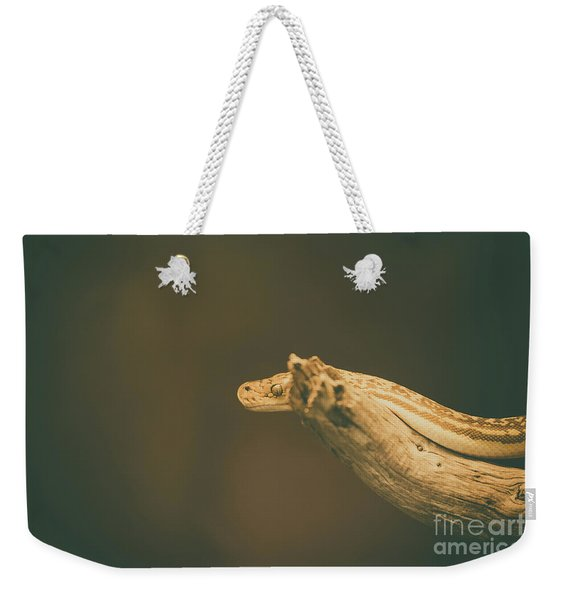 Weekender Tote Bag featuring the photograph The Stare by Dheeraj Mutha