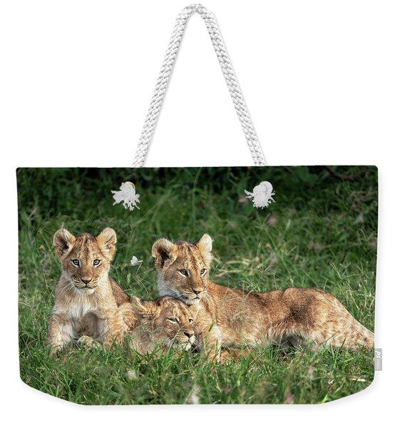 Three Cute Lion Cubs In Kenya Africa Grasslands Weekender Tote Bag