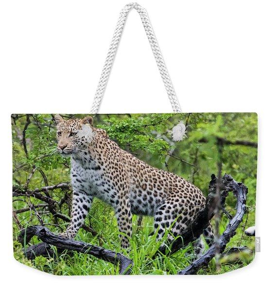 Tree Climbing Leopard Weekender Tote Bag