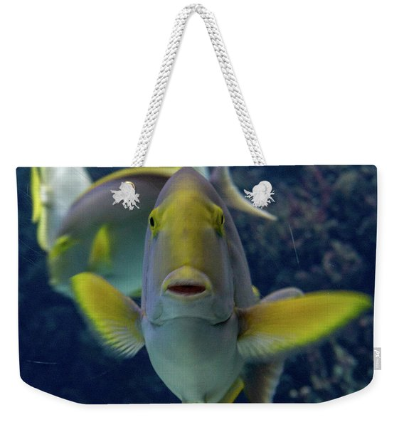 Weekender Tote Bag featuring the photograph Tropical Fish Poses. by Anjo Ten Kate
