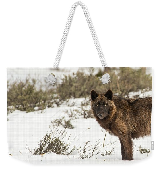 Weekender Tote Bag featuring the photograph W12 by Joshua Able's Wildlife