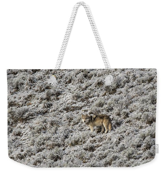 Weekender Tote Bag featuring the photograph W17 by Joshua Able's Wildlife