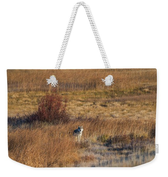 Weekender Tote Bag featuring the photograph W2 by Joshua Able's Wildlife