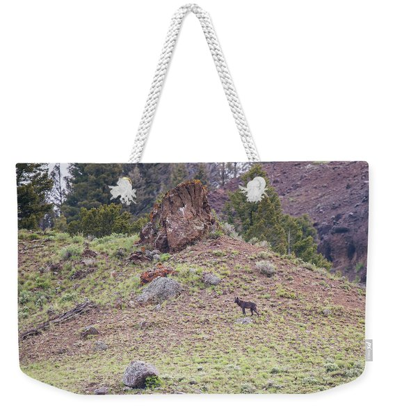 Weekender Tote Bag featuring the photograph W21 by Joshua Able's Wildlife