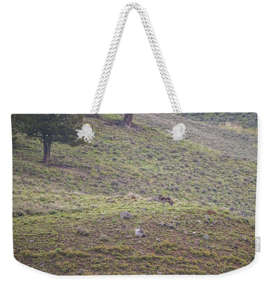 Weekender Tote Bag featuring the photograph W25 by Joshua Able's Wildlife