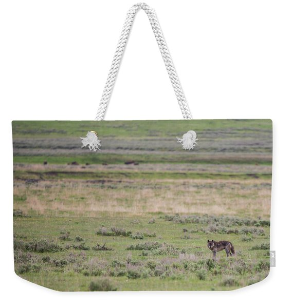 Weekender Tote Bag featuring the photograph W26 by Joshua Able's Wildlife