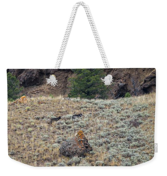Weekender Tote Bag featuring the photograph W32 by Joshua Able's Wildlife