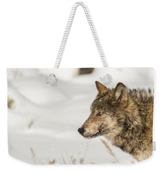 Weekender Tote Bag featuring the photograph W37 by Joshua Able's Wildlife