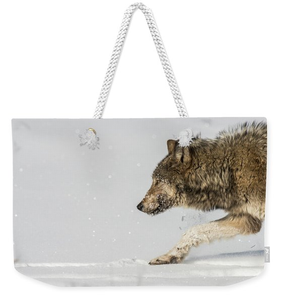Weekender Tote Bag featuring the photograph W40 by Joshua Able's Wildlife