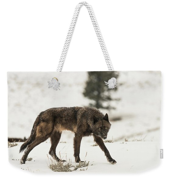 Weekender Tote Bag featuring the photograph W42 by Joshua Able's Wildlife