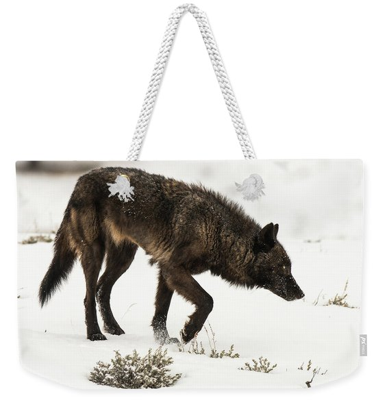 Weekender Tote Bag featuring the photograph W47 by Joshua Able's Wildlife