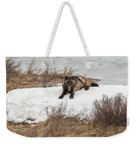 Weekender Tote Bag featuring the photograph W57 by Joshua Able's Wildlife