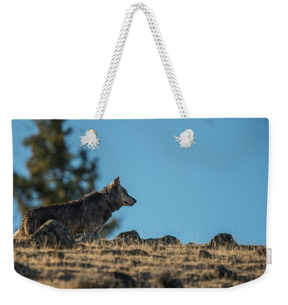 Weekender Tote Bag featuring the photograph W61 by Joshua Able's Wildlife