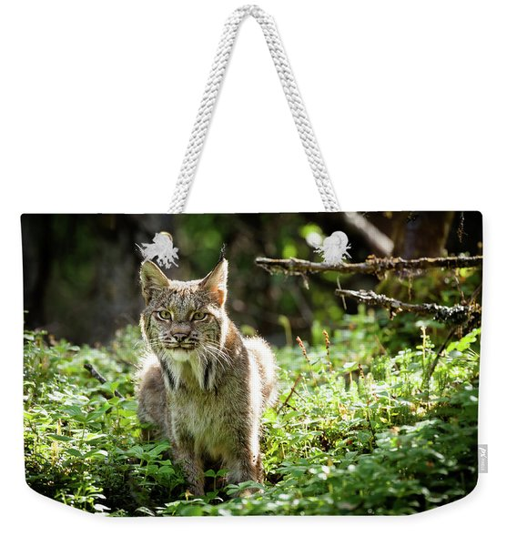 Weekender Tote Bag featuring the photograph Watchful Mama Lynx by Tim Newton