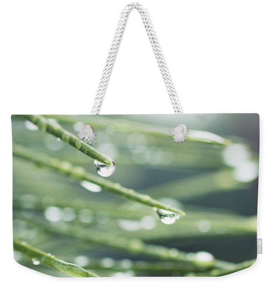 Weekender Tote Bag featuring the photograph Water Droplets On Fir Needles by Charmian Vistaunet