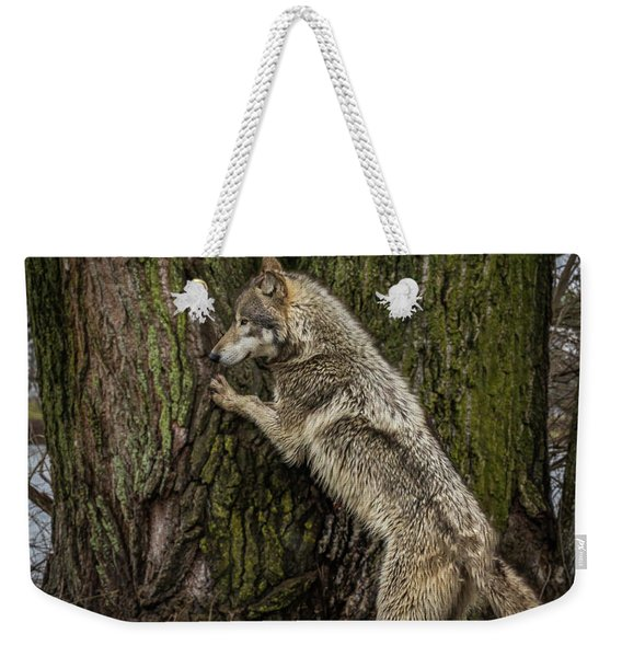 What's In There Weekender Tote Bag