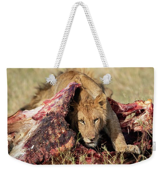 Young Lion On Cape Buffalo Kill Weekender Tote Bag