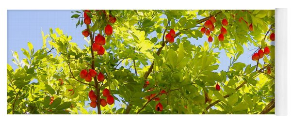 Ackee Tree Jamaica2 Yoga Mat