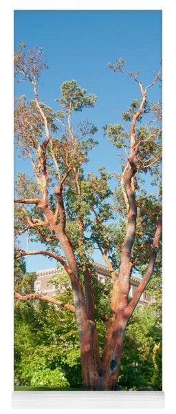 Arbutus Tree Yoga Mat