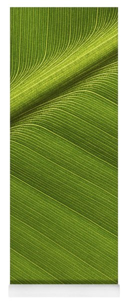 Yoga Mat featuring the photograph Banana Leaf Showing Rib Netherlands by Ronald Pol
