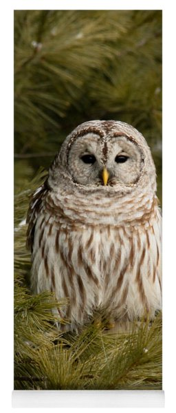 Barred Owl In A Pine Tree. Yoga Mat