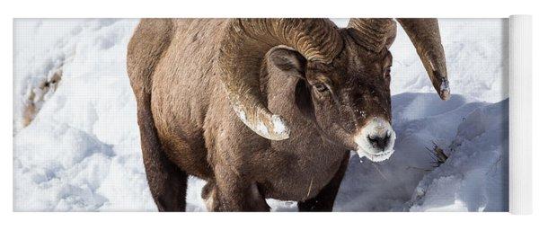 Bighorn Sheep Yoga Mat