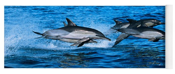 Common Dolphins Breaching In The Sea Yoga Mat