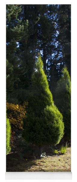 Funeral Cypress Trees Yoga Mat