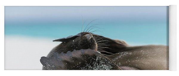 Galapagos Sea Lion Pup Covering Face Yoga Mat