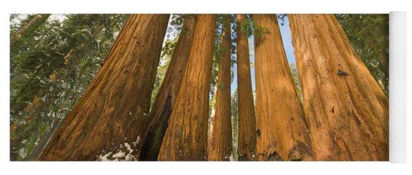 Giant Sequoias Sequoia N P Yoga Mat