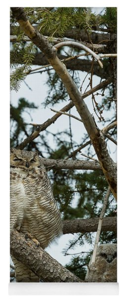 Great Horned Owls Yoga Mat