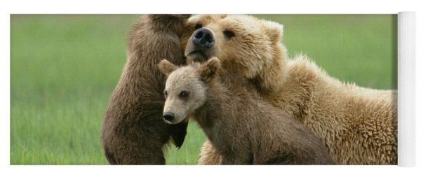 Grizzly Cubs Play With Mom Yoga Mat