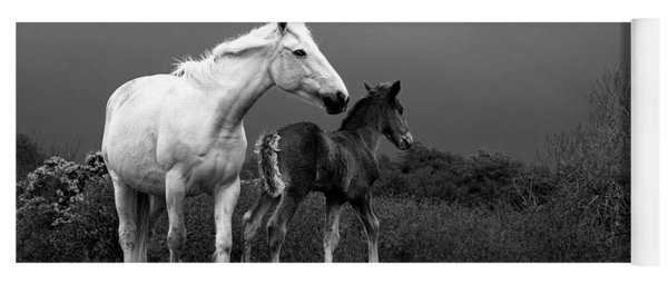 Mare And Foal, Co Derry, Ireland Yoga Mat