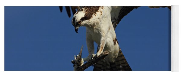 Osprey With A Fish Photo Yoga Mat