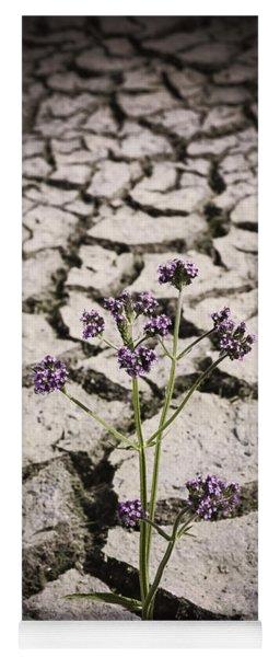 Plant Growing Through Dirt Crack During Drought   Yoga Mat