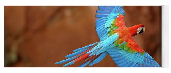 Red And Green Macaw Flying Yoga Mat