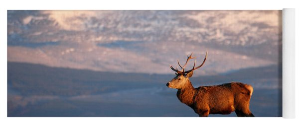 Red Deer Stag Yoga Mat
