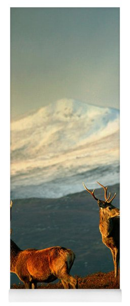 Red Deer Stags Yoga Mat