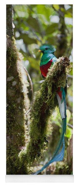Resplendent Quetzal Male Costa Rica Yoga Mat