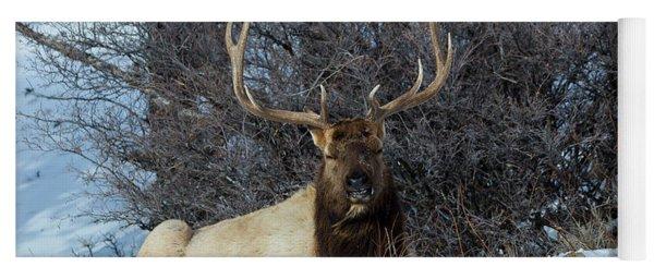 Rocky Mountain Elk Yoga Mat