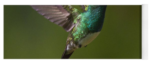 Snowy-bellied Hummingbird Yoga Mat