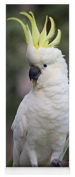 Sulphur-crested Cockatoo Displaying Yoga Mat