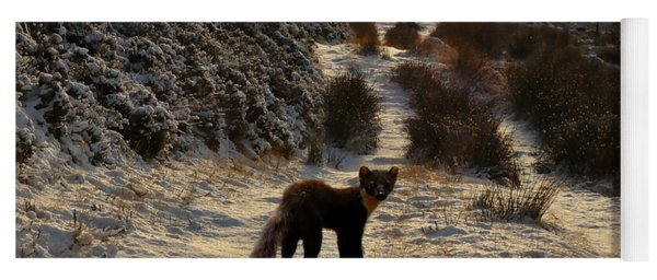 The Pine Marten's Path Yoga Mat